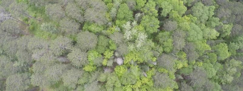 Overhead image of tree crowns
