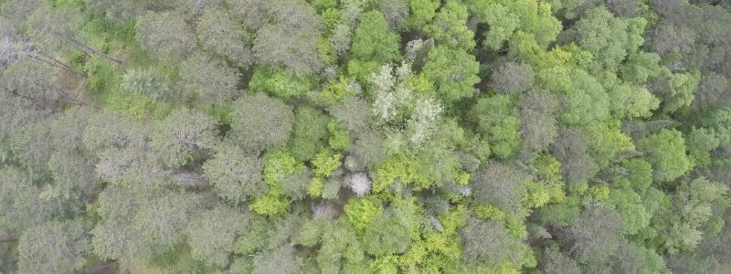 UAS image of CFC forest