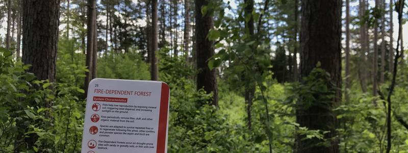 Climate change pocket guide fire dependent forests