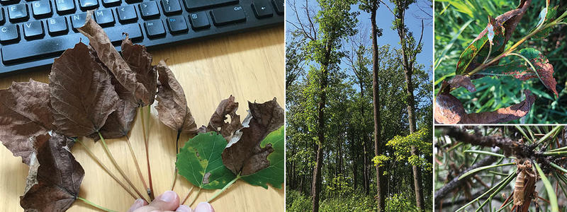 leaves and keyboard and hardwood and conifer trees impacted by insect and disease agents.