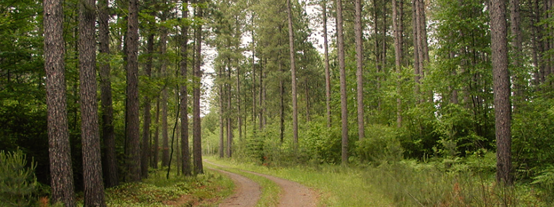 Forest road at Cloquet Forestry Center