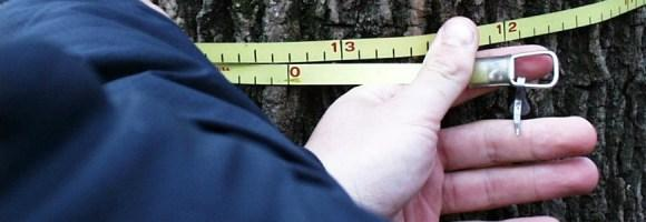 tape measure around a tree