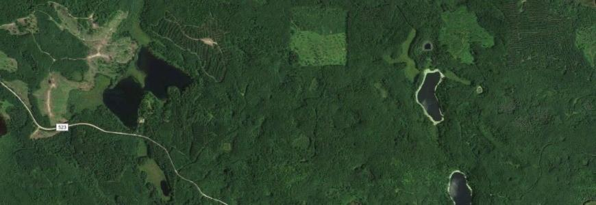 Satellite image of forested area showing some harvest blocks