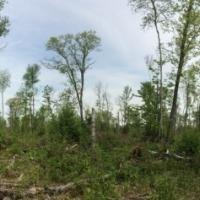 Forest structure left to benefit wildlife after partial hardwood timber harvest in Pine County, MN