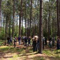 Discussing wildlife habitat in a Minnesota red pine plantation