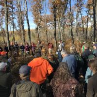 Mike Gibbons discusses an Itasca County oak shelterwood site