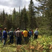 Discussing spruce budworm damage and silvicultural options in Two Harbors