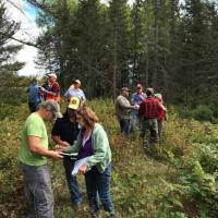 Small-group activity around spruce budworm management options in Two Harbors