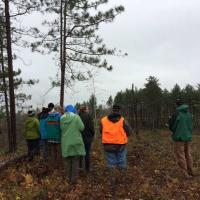 Viewing a large clearcut with white pine retention