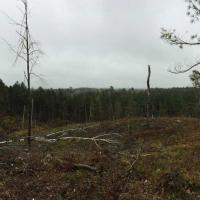 A large clearcut with white pine retention